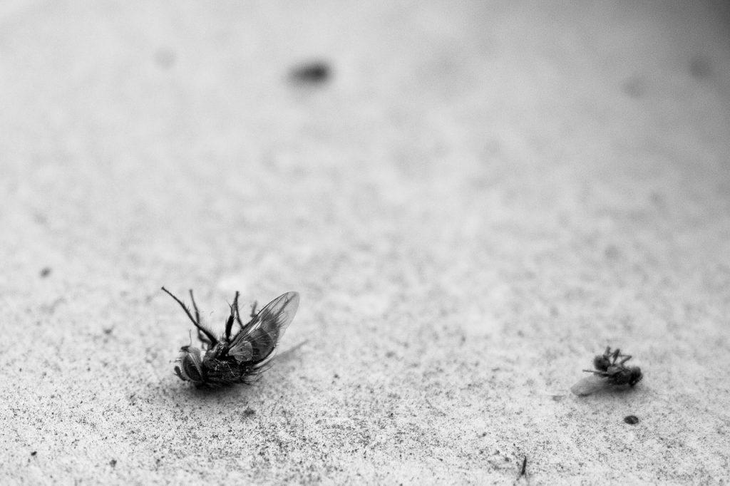 flies dead pest